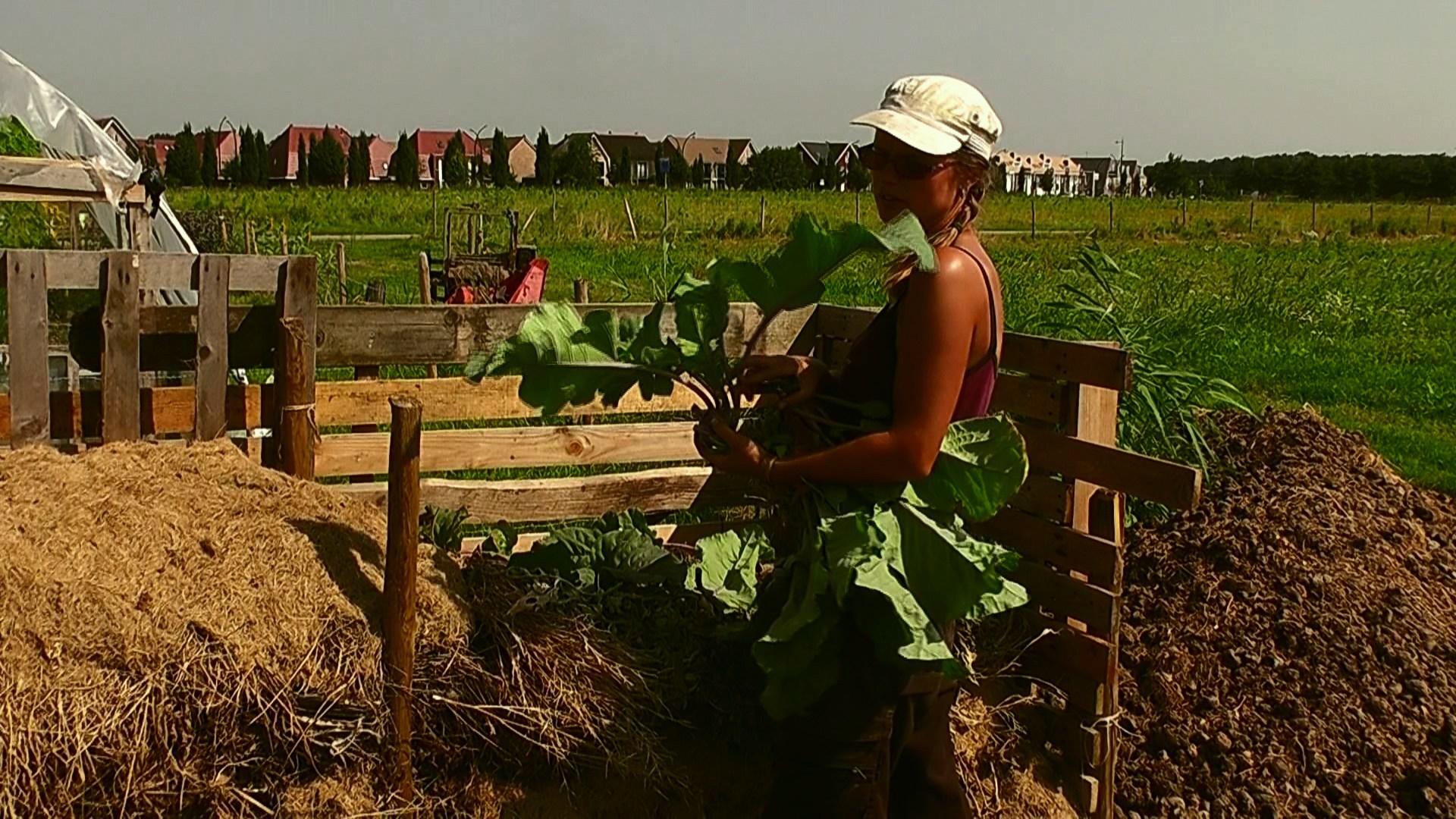 Afbeeldingsresultaat voor community supported agriculture netherlands